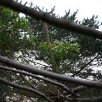 Wild Rose Arbor