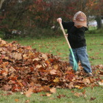 Raking leaves with a rake